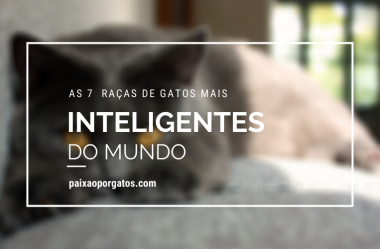 As 7 Raças De Gatos Mais Inteligentes Do Mundo