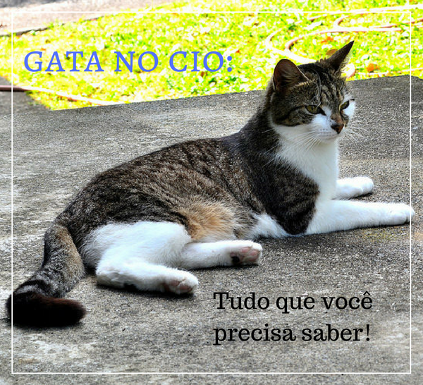 Gata no Cio