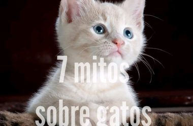 7 Mitos Sobre Os Gatos